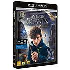 Fantastic Beasts and Where to Find Them (UHD+BD)