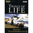 Trails of Life - David Attenborough