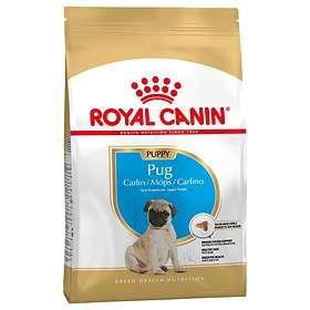 Royal Canin BHN Pug Junior 1.5kg