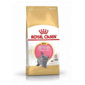 Royal Canin Breed British Shorthair Kitten 2kg