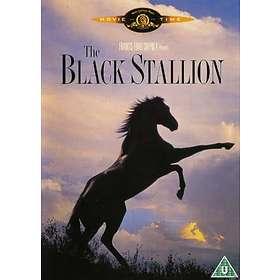 Black stallion fuck, amateur de sexe hard