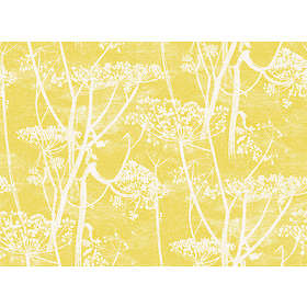 Cole & Son Cow Parsley New Contemporary (66/7051)