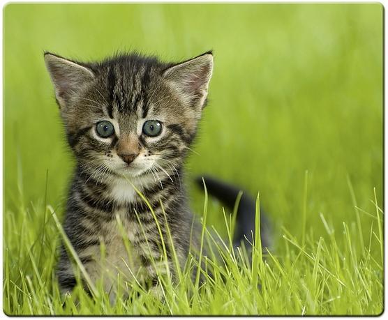 Speed-Link SL-6242 Baby Cat