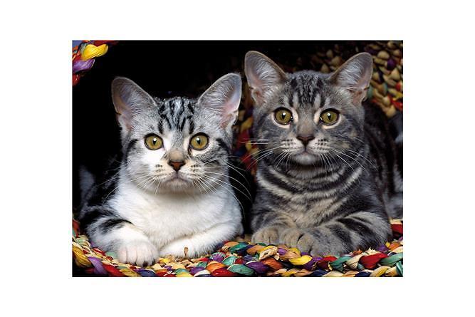 Ednet Cats