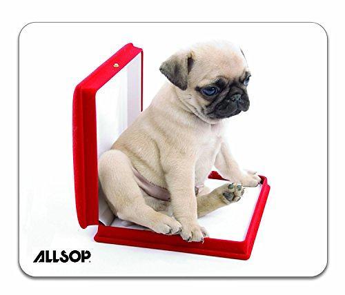 Allsop Dog in Box