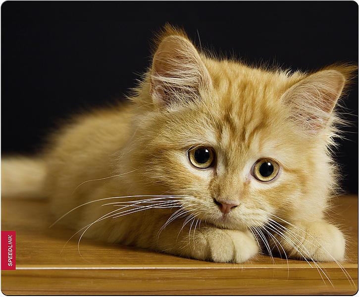 Speed-Link SL-6242 Baby Cat II
